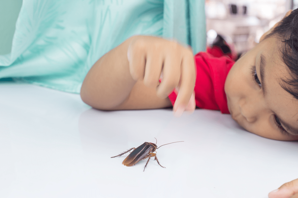 Evinizi Böceklerden Temizleyin